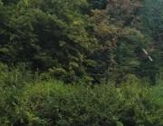 Akcja sadzenia drzewek w Mikołowskim Parku Botanicznym